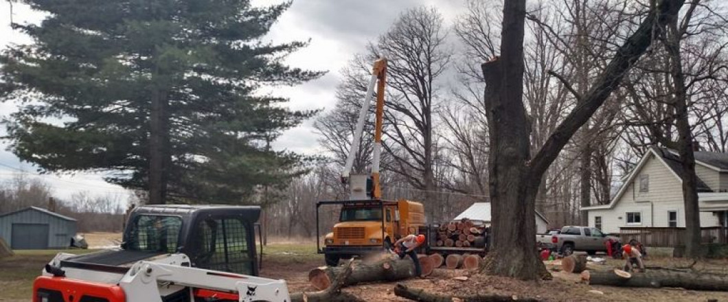 Lot Clearing in Lansing & Windsor Charter Township, MI